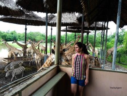 Bangkok Safari TheStyligent